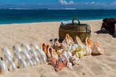 Conchs and seashells for sale on a beach — Stock Photo
