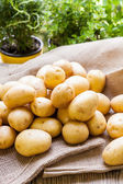 Farm fresh  potatoes on a hessian sack — Stock Photo