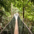 Постер, плакат: Narrow cable suspension footbridge
