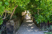 Quiet village lane with lush vegetation in Bali — Stock Photo