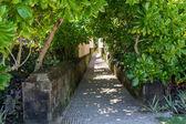 Quiet village lane with lush vegetation in Bali — Stock Photo