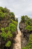Beach with lush vegetation — Stock Photo