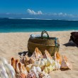 Conchs and seashells for sale on a beach — Stock Photo #48673749