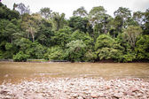 Stony river bed in green jungle — Stok fotoğraf