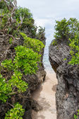Beach with lush vegetation — Stock Photo