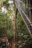 Narrow cable suspension footbridge — Stock Photo