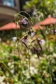Delicate purple flower — Stock Photo
