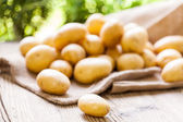 Fresh potatoes on sack — Stock Photo