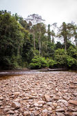Stony river bed in green jungle — Stock fotografie