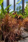 Village lane with lush vegetation — Stock Photo