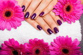 Purple nails — Stock Photo