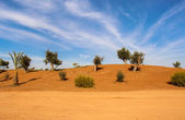 Scenic desert landscape — Stock Photo