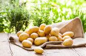 Potatoes on hessian sack — Stock Photo