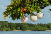 Paper lanterns hanging form a tree — Foto de Stock