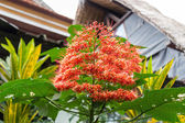 Tropical flower plant — Foto de Stock