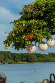 Paper lanterns hanging form a tree — Stock fotografie