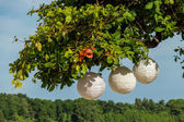 Paper lanterns hanging form a tree — Stock Photo