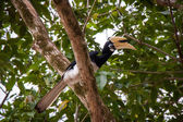 Hornbill perched in a tree — Stok fotoğraf