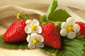 Fresh strawberries with flowers and silk — Foto de Stock