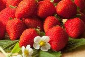 Fresh strawberries with white spring flower — Stock Photo