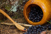 Picked blueberries spread on a ground — Stock Photo
