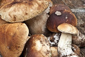 Different size of collected boletus edulis — Stock Photo