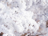 Close view of frost — Stock Photo