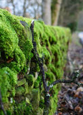 Thick moss on dry stone wall near Monyash in Peak District National Park, England — Stock Photo