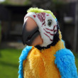 Toy parrot — Stock Photo