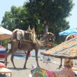 Camels on beach — Photo #29459031
