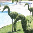 Stock Photo: Art of topiary