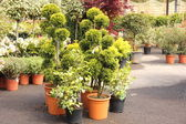 Potted plants — Stock Photo