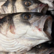 Sea bass — Stock Photo #47318243