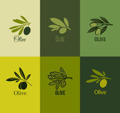 Olive branch. Set of labels. Vector illustration — Stock Vector
