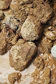 Rocas fangosas — Foto de Stock