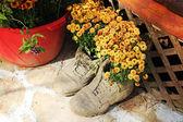 Flowers in Shoe Pot — Zdjęcie stockowe