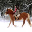 Woman Riding a Horse the Snow — Stock Photo