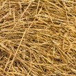 Straw Fodder Bales in Winter — Stock Photo