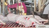 食肉工場 — ストック写真