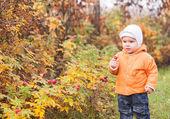 Enfant, cueillette de cynorhodon d'un buisson — Photo