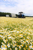 Field of colorful daisy with out of focus farm tractor in the background — Stockfoto