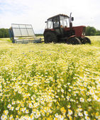 Field of colorful daisy with  farm tractor in the background — Stockfoto