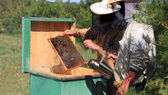 Beekeepers checking a beehive — Stock fotografie