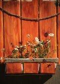 White daisies in a brown pot on a wooden background — Foto de Stock