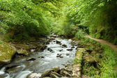 Brook in English countryside — Stock Photo