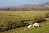 View from Cheddar Reservoir Somerset England — Stock Photo