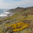 South West Coast Path Woolacombe Devon England towards Morte Point — Stock Photo