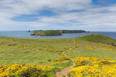 Skomer Island Pembrokeshire West Wales UK — Stock Photo