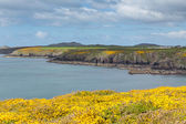 St Brides Bay Pembrokeshire West Wales UK — Stock Photo