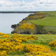 Marloes and St Brides bay West Wales coast near Skomer island. — Stock Photo #26868455